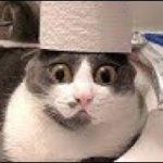 「おもしろ犬, 猫」最高におもしろ犬, 猫のハプニング動画選・かわいすぎる犬, 猫