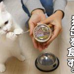 【非常事態発生】猫缶を初めて食べた飼い猫が可愛すぎる!Emergency occurs!! The cat ate the canned cat food the first time.