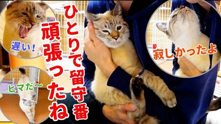 帰宅してすぐスリスリ攻撃をしてくる猫がかわいすぎた【デュフィの留守番後編】