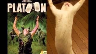 猫おもしろ動画 少し笑えるネコ画像 (funny pictures of cats) [猫gifアニメ]