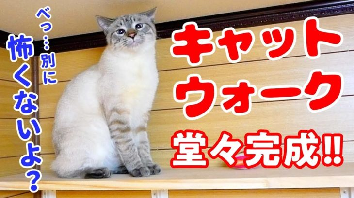 キャットウォークを初めて見た猫がビビって取った意外な行動がかわいすぎた