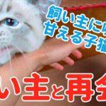 【猫と飼い主の再会】久しぶりの再会で鳴きまくって甘える子猫