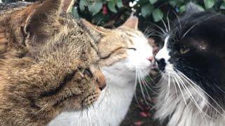 1番の甘えん坊猫はどの猫だ!?かわいい猫動画