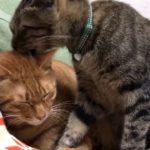 頭が子猫、野良→家猫への転職に成功する