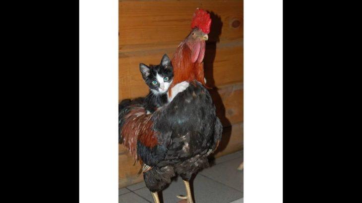 「面白い動物」あり得ないことをする犬, 猫・おもしろ犬, 猫のハプニング, 失敗集 #215