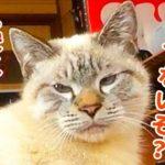 猫が体に乗ってきたのでナデナデしてたら急に怒られました…
