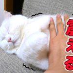 うちの猫は寝ていると突然震えます!その理由とは…?