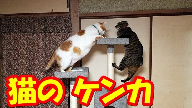 猫のケンカCat's fight