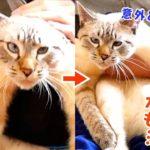 暴れる猫もトロンと溶ける手袋ブラシでブラッシングしたら猫が変な顔になっちゃいました