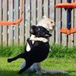 「面白い動物」あり得ないことをする犬, 猫・おもしろ犬, 猫のハプニング, 失敗集 #233