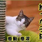【感動 泣ける話 猫】北海道の山中で拾ったみすぼらしい子猫の話・これも何かの縁だろうと思う(猫 感動 泣ける話 保護 涙腺崩壊 感涙 動物 動画 里親)招き猫ちゃんねる
