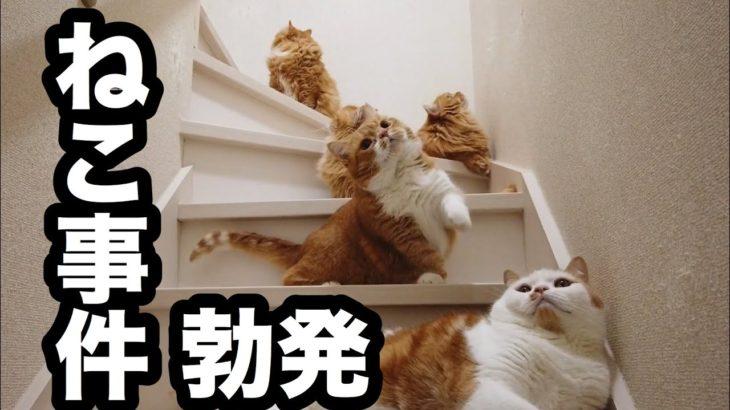 猫一家ハプニングだらけ