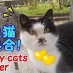野良猫が大集合!ご飯が欲しいネコ・・・うちの猫ちゃんたちカワイイTV