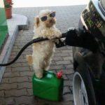 「面白い動物」あり得ないことをする犬, 猫・おもしろ犬, 猫のハプニング, 失敗集 #227