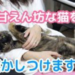 甘えん坊な猫を抱っこして寝かしつけます!