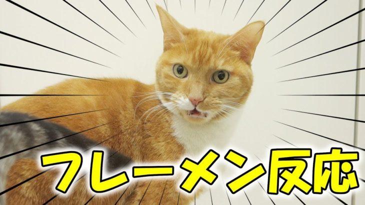 猫がわざわざフレーメン反応の顔をコチラに見せてくれる【猫 おもしろ】
