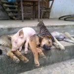 「絶対笑う」最高におもしろ犬,猫,動物のハプニング, 失敗画像集 #450