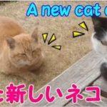 野良猫にご飯 また新しいネコが増えました!・・・うちの猫ちゃんたちカワイイTV