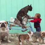 「面白い動物」あり得ないことをする犬, 猫・おもしろ犬, 猫のハプニング, 失敗集 #217