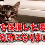 子猫を保護した場所が観光名所に! 奇跡ねこアイの新生活 保護して2ヶ月半が経ちました 4K supernabura