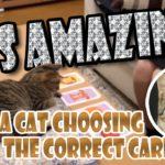 A Cat Choosing the Correct Card!! カードを当てる猫