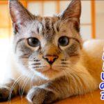 【祝!大賞受賞】猫のデュフィが2019年のにゃんこ大賞をいただきました