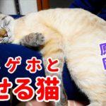 猫が苦しそうにむせる【原因と今後の対策について】