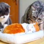 「面白い動物」あり得ないことをする犬, 猫・おもしろ犬, 猫のハプニング, 失敗集 #255