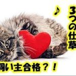 猫の気持ち・猫が幸せを感じている時の仕草、幸せな猫がする3つの行動・猫の幸せって?・招き猫ちゃんねる