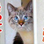 """この人…誰?人見知りしない猫もビビって隠れちゃった""""例のあの人""""との初対面動画"""