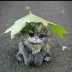 「かわいい猫」最高におもしろ, かわいい子猫たちの動画・とても癒やされる
