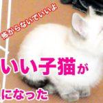 かわいい子猫がやってきた Cute kitten has come