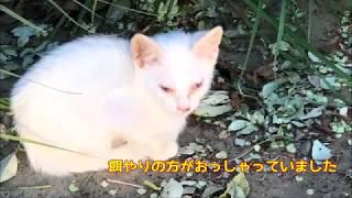 目がただれた白い子猫 母猫がかわいい子猫を・・・