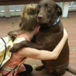 「犬と飼い主の感動再会」数年ぶりに飼い主に会えた犬が大号泣・ずっと待ってたよ