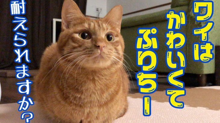 こんな可愛い猫に見つめられたら堪らない!!