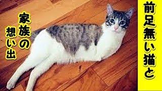 【猫 泣ける話】左前足がなかった猫との 私達家族の出会いと想い出!(猫 感動 泣ける話 保護 涙腺崩壊 感涙 動物 動画 里親)招き猫ちゃんねる