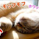 お腹を見せて爆睡中の猫を撫で回した結果…