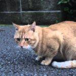 去勢後のボス猫、意外な行動に出る