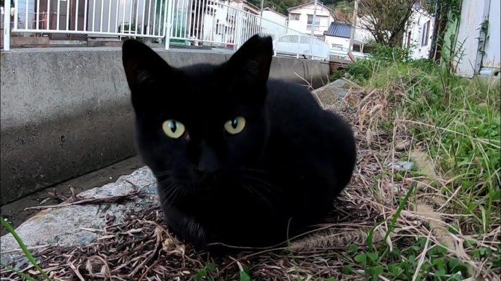漁港の街で人懐っこい黒猫に出会った