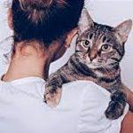 不思議な猫の心温まる怖い話・私を守ってくれている3匹の猫・招き猫ちゃんねる