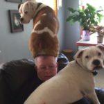 「おもしろい犬」座り心地の良い椅子だ・最高におもしろい動物, 犬, 猫のハプニング, イタズラ, 失敗動画集