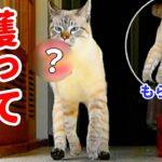 ピョコピョコ走る猫の意外な身体能力に目が離せない…!