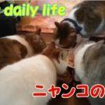 お部屋で過ごすニャンコの日常・・・うちの猫ちゃんたちカワイイTV