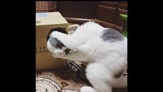 「面白い動物」あり得ないことをする犬, 猫・おもしろ犬, 猫のハプニング, 失敗集 #258