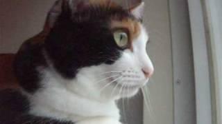 猫がビックリ顔になる音 – Meow and Surprise face