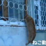おもしろネコ動画総集編2012