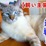 初めてのお世話で猫は心を開いてくれるでしょうか?