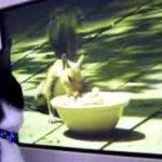 ねこが見るDVDを見る猫にゃむちん