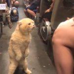 ふざけすぎた飼い主に怒る猫・マジでキレる猫が面白すぎる・かわいい猫