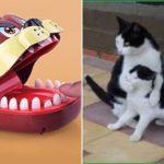 「面白い動物」あり得ないことをする犬, 猫・おもしろ犬, 猫のハプニング, 失敗集 #257 (Funny cat and crocodile movie toy part 2 )